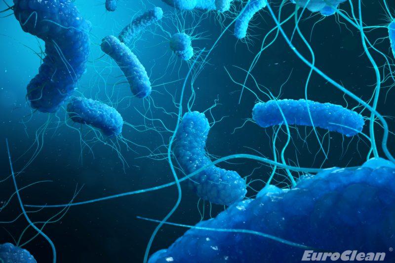 Jakość wody w zamkniętych obiektach - bakterie