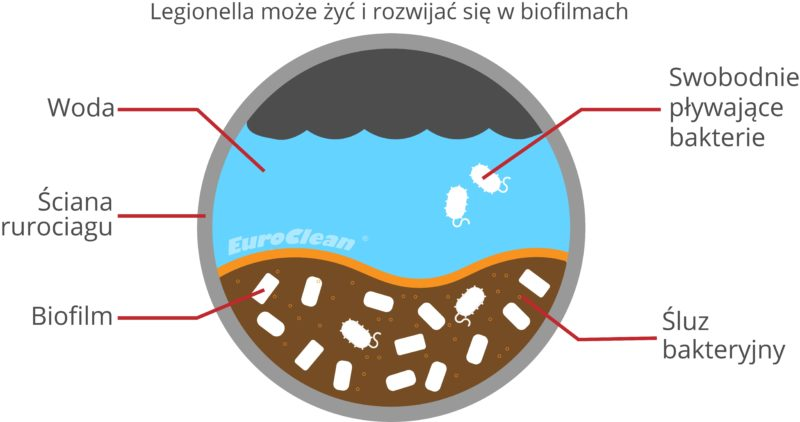 Legionella i biofilm