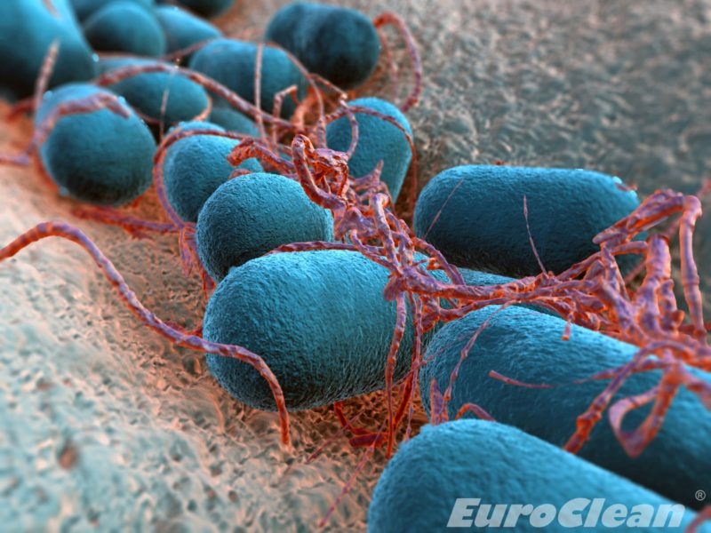 Bakterie Legionella